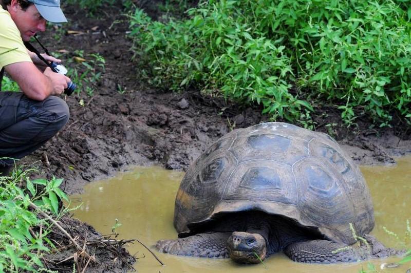 Galapagos-Safari-Camp-schildpadden-spotten